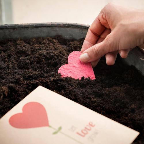 Groeikaartje, Let Love Grow!